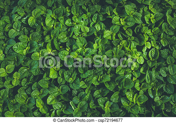Top view of leaf small plant in garden - csp72194677