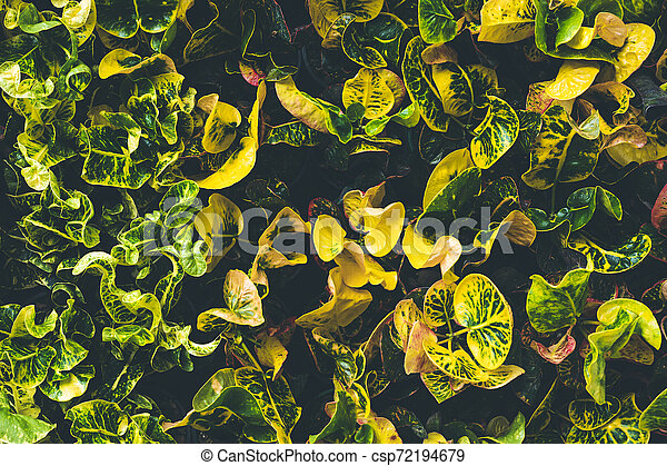 Top view of leaf small plant in garden - csp72194679