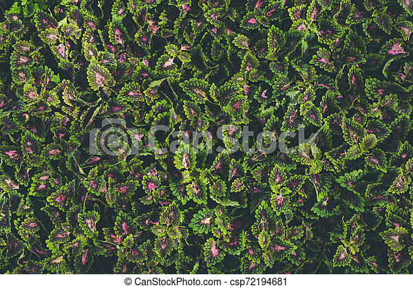 Top view of leaf small plant in garden - csp72194681