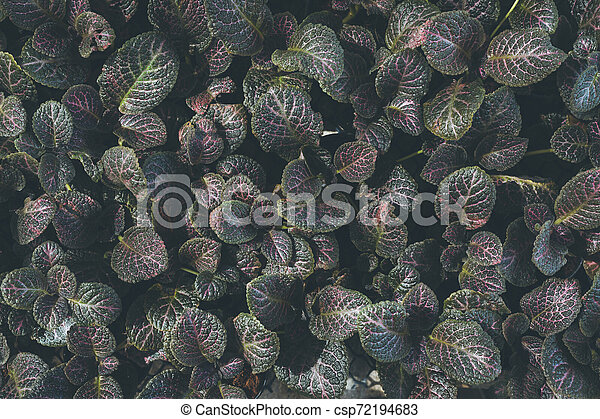 Top view of leaf small plant in garden - csp72194683