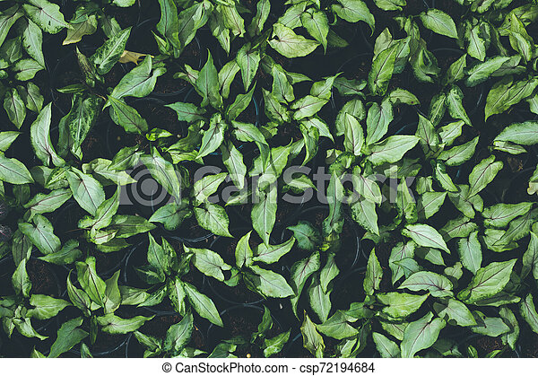 Top view of leaf small plant in garden - csp72194684