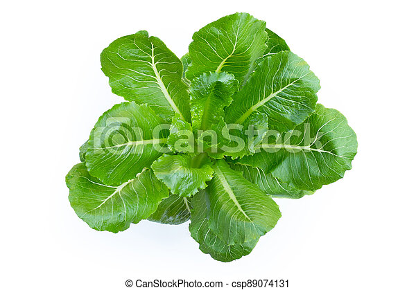 Top view of organic vegetable green cos lettuce on white background. - csp89074131