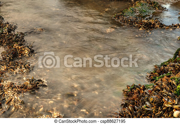 Top view of shells and water between stones with moss on the beach - csp88627195
