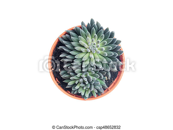 Top view of small cactus - csp48652832
