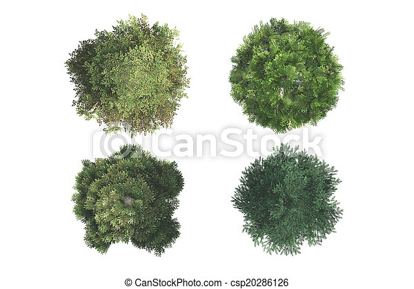 Top View of Trees - csp20286126
