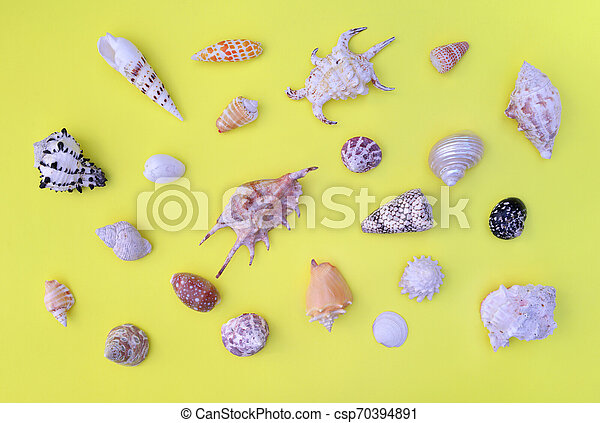 top view on a seashells collection of differetn shapes and aranged on the whole frame on yellow background - csp70394891