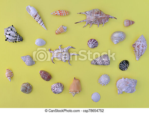 top view on tropical seashells arranged on yellow background - csp78654752