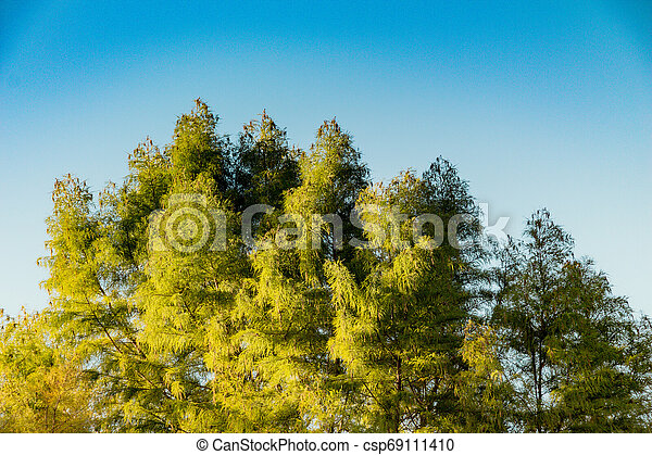 Top view tree leaves with branches growing in botanical park - csp69111410