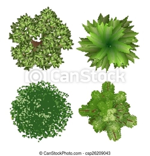 Top View Trees Tree Elements For Landscape Design On White