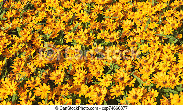 Top view yellow flower on background - csp74660877