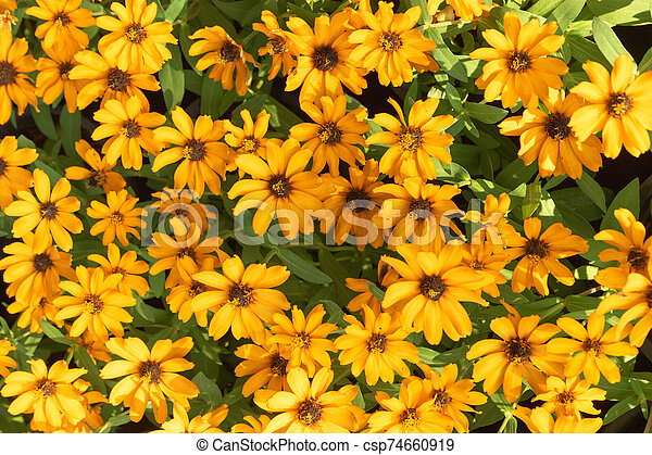 Top view yellow flower on background - csp74660919