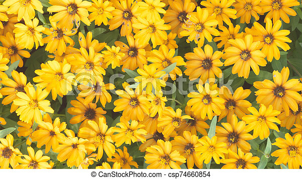 Top view yellow flower on background - csp74660854