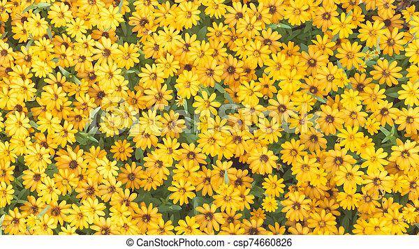 Top view yellow flower on background - csp74660826