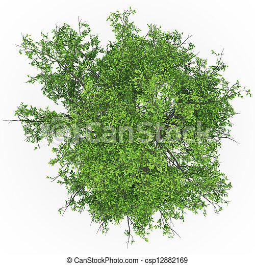 topo, árvore cinza - csp12882169