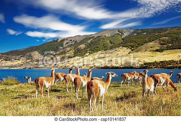 torres del paine, chile, patagonia - csp10141837