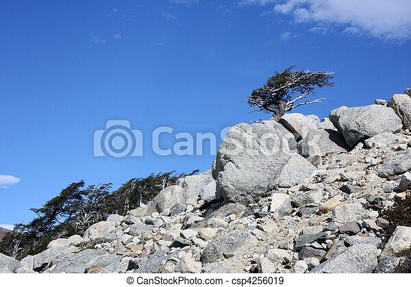 Torres del Paine  - csp4256019