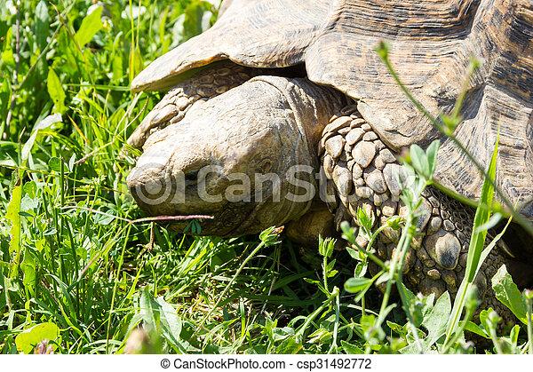 Tortoise - csp31492772