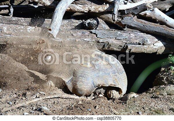 Tortoise - csp38805770