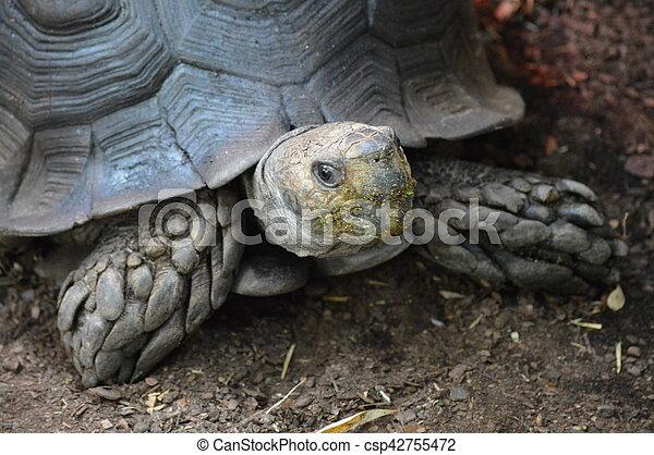 Tortoise - csp42755472