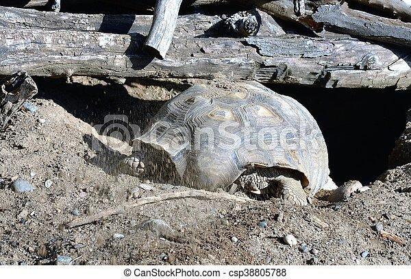 Tortoise - csp38805788