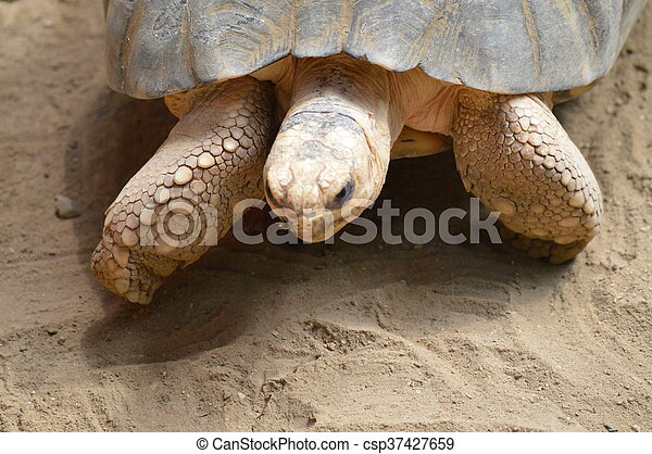 Tortoise - csp37427659