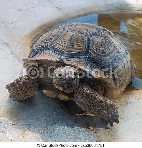 Tortoise - csp38684751