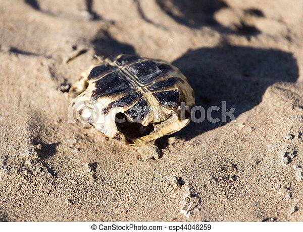 tortoise - csp44046259