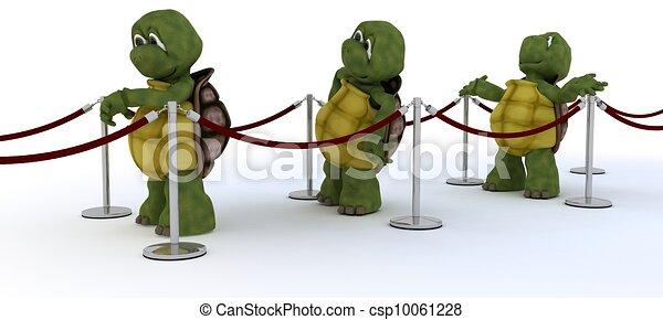 tortoises waiting in line - csp10061228