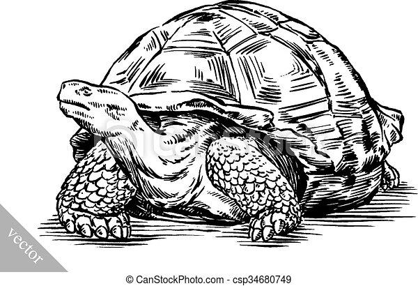 Tortue dessiner graver illustration encre tortue - Comment dessiner une tortue ...