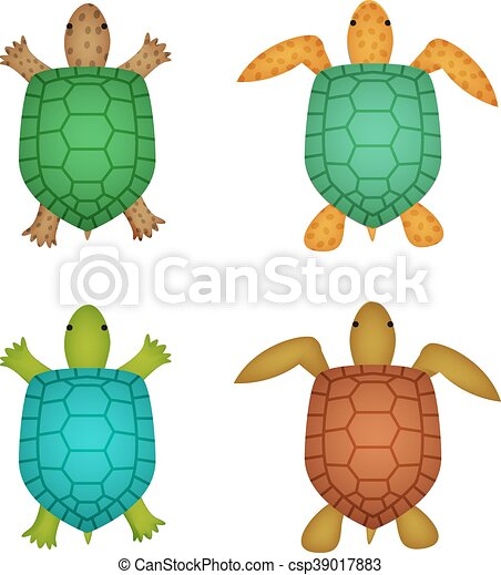 Tortue Tortue Sommet Realiste Vue Style Tortue Tortue