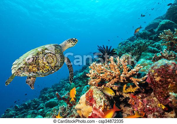 Coral arrecife con tortuga - csp34872335