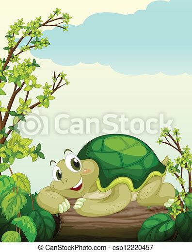 Una tortuga sobre madera seca - csp12220457