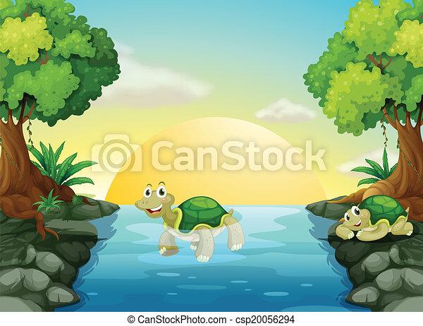 Una tortuga sonriente en el río - csp20056294