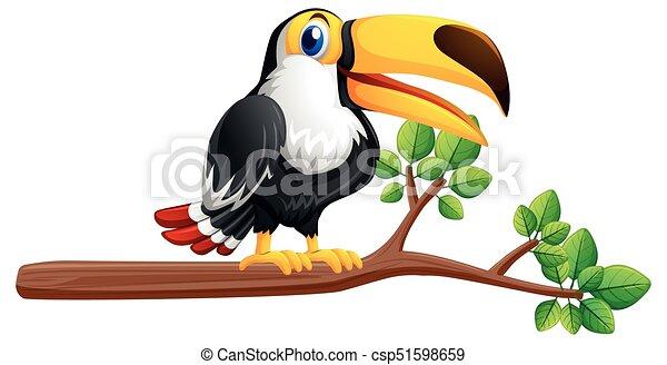 Toucan bird on the branch - csp51598659