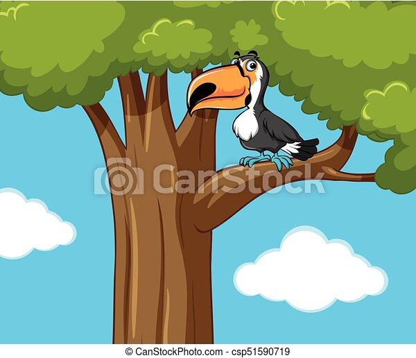 Toucan bird on the branch - csp51590719