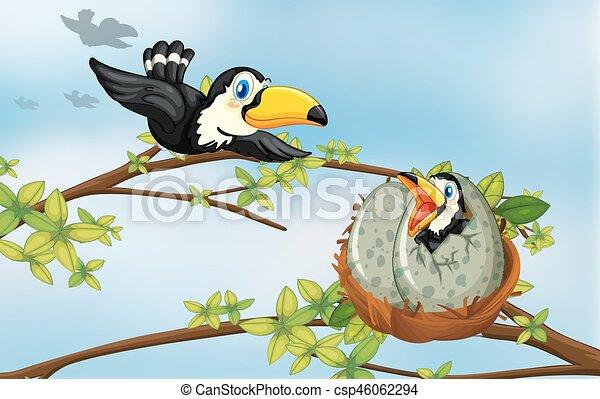 Toucan birds on the nest - csp46062294