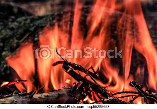 Tourist bonfire in the wild forest. A flame of fire in a dark forest. - csp55285653