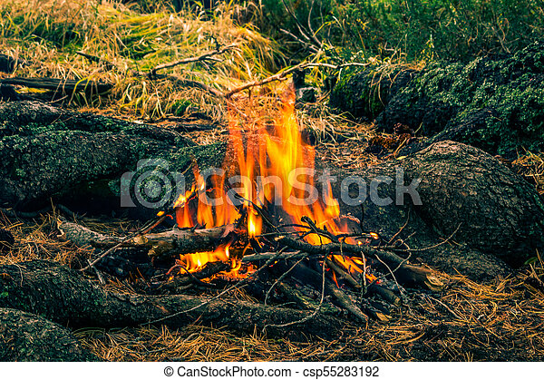 Tourist bonfire in the wild forest. A flame of fire in a dark forest. - csp55283192