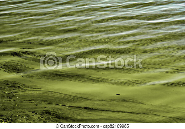 toxic pollution in the river - csp82169985