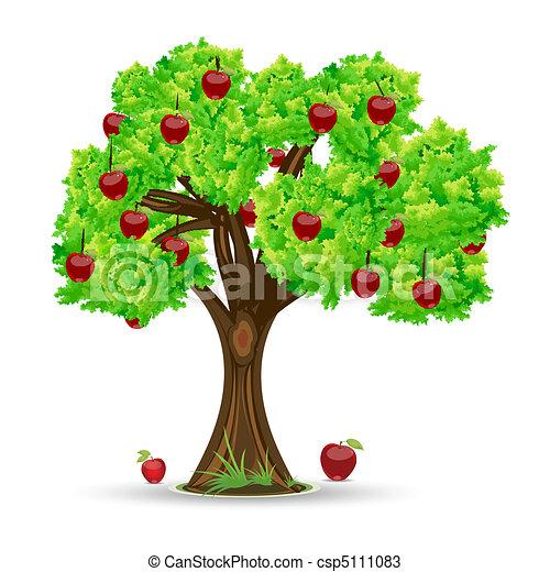 träd, äpple - csp5111083