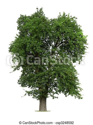 träd, äpple - csp3248592