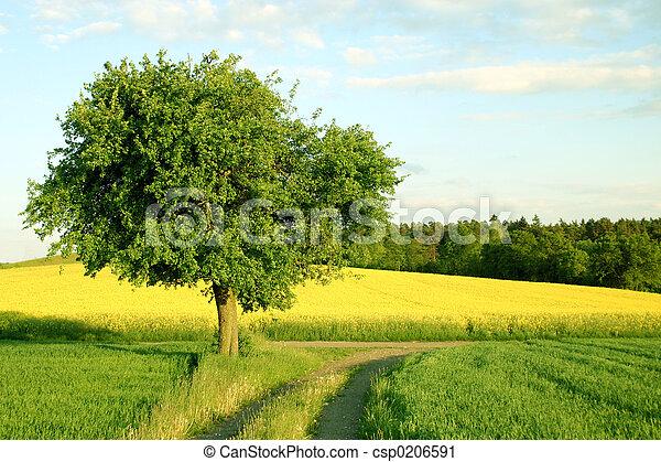 träd - csp0206591