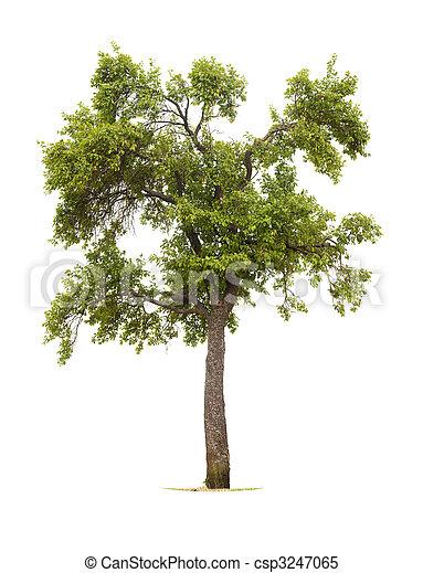 träd - csp3247065