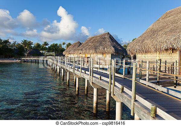 Träd, vatten, hus, palm, seacoast, liten, solnedgång.