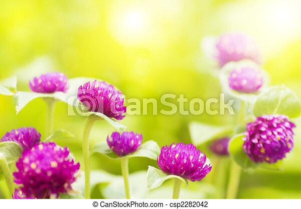 trädgård, morning., synhåll - csp2282042