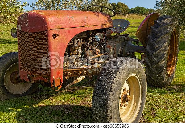 trädgård, sätta, rostning, röd, nära, traktor - csp66653986