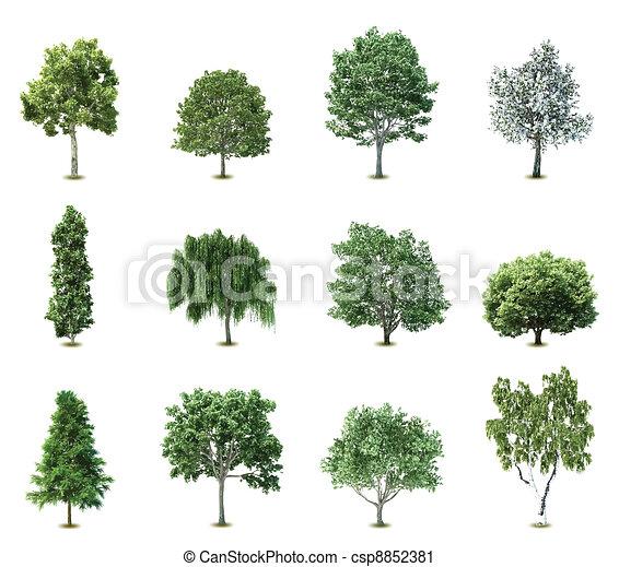 træer., vektor, sæt - csp8852381