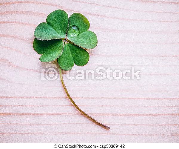 trèfle, feuille, mesquin, foi, espoir, bois, amour, feuilles, symbolique, quatre, arrière-plan., seconde, quatrième, luck., troisième, premier - csp50389142