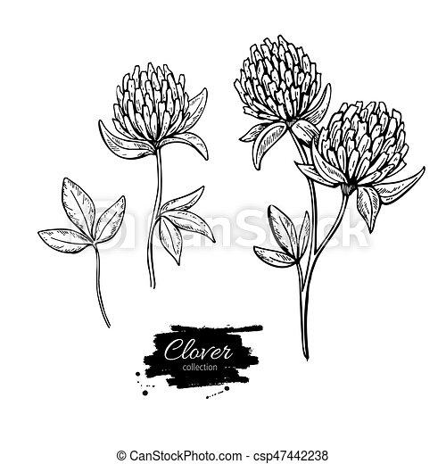 Trèfle Plante Fleur Illustration Set Style Isolé Sauvage Vecteur Herbier Leaves Gravé Dessin