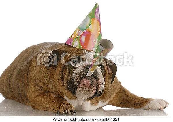 tröttsam, blåsning, bulldogg, hund, horn, födelsedag, engelsk, hatt - csp2804051
